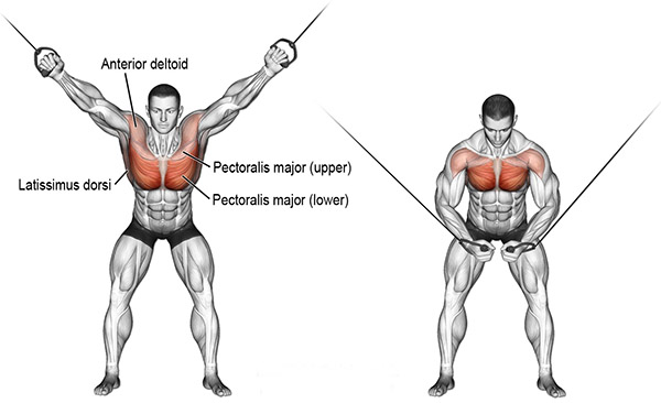 chest cable crossovers.jpg