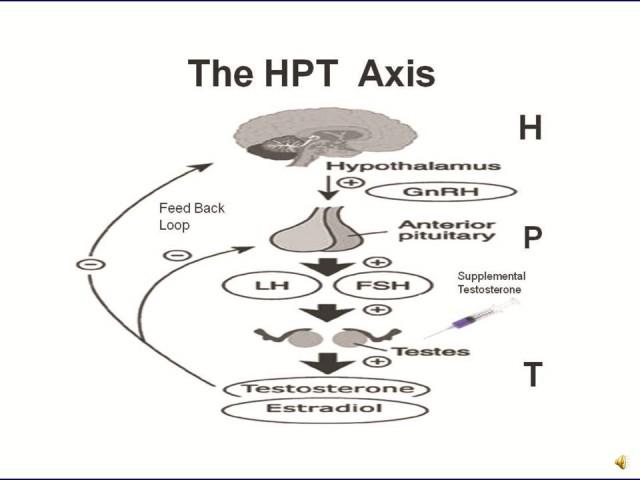 hpta-axis.jpg