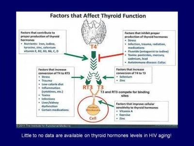 factors that affect thyroid.jpg