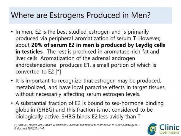 sources of estrogen in men.JPG