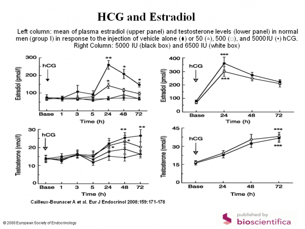 HCG men estradiol.PNG