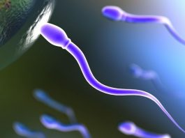 Increase testosterone and sperm